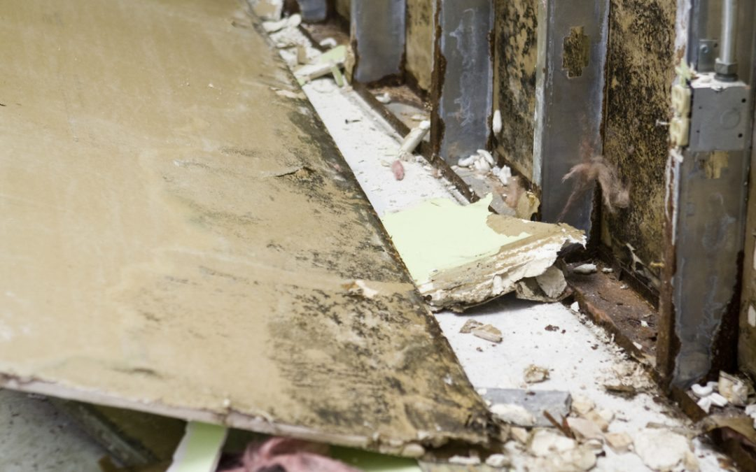 What Every Worker Should Know – Toxic Mold and Workers Comp Claims